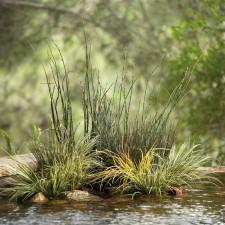 Refreshing Pond or pool
