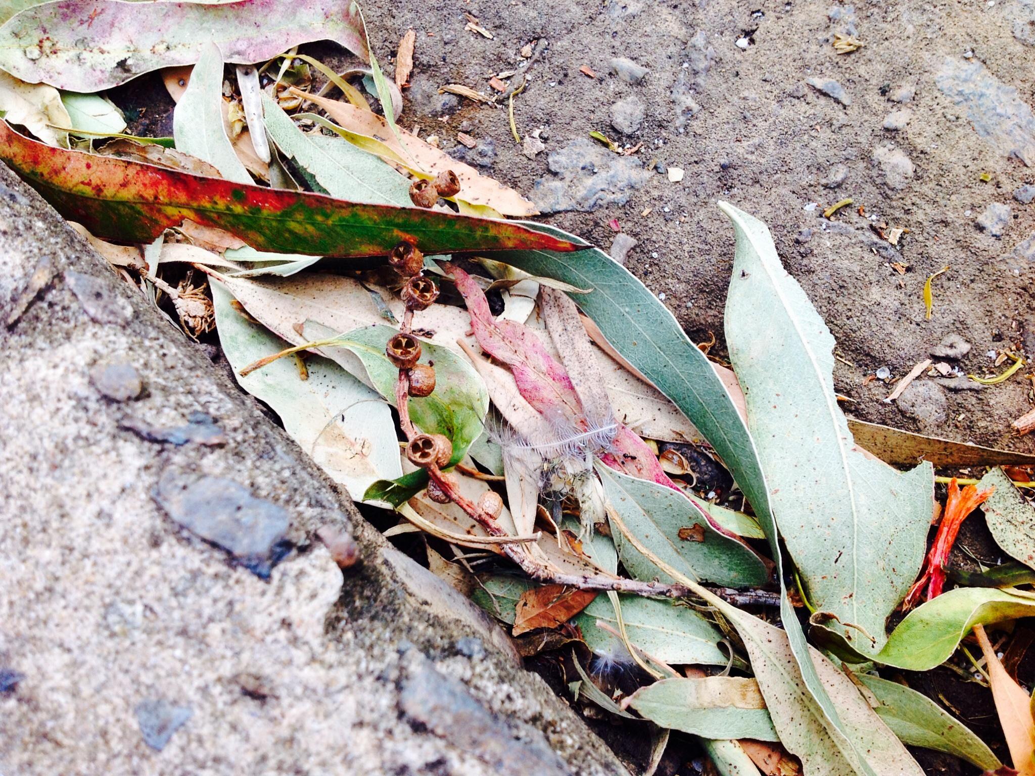 Contentment, simple life, simple living, leaf  mulch, gum nuts, gum leaf, gum leaves, eucalyptus