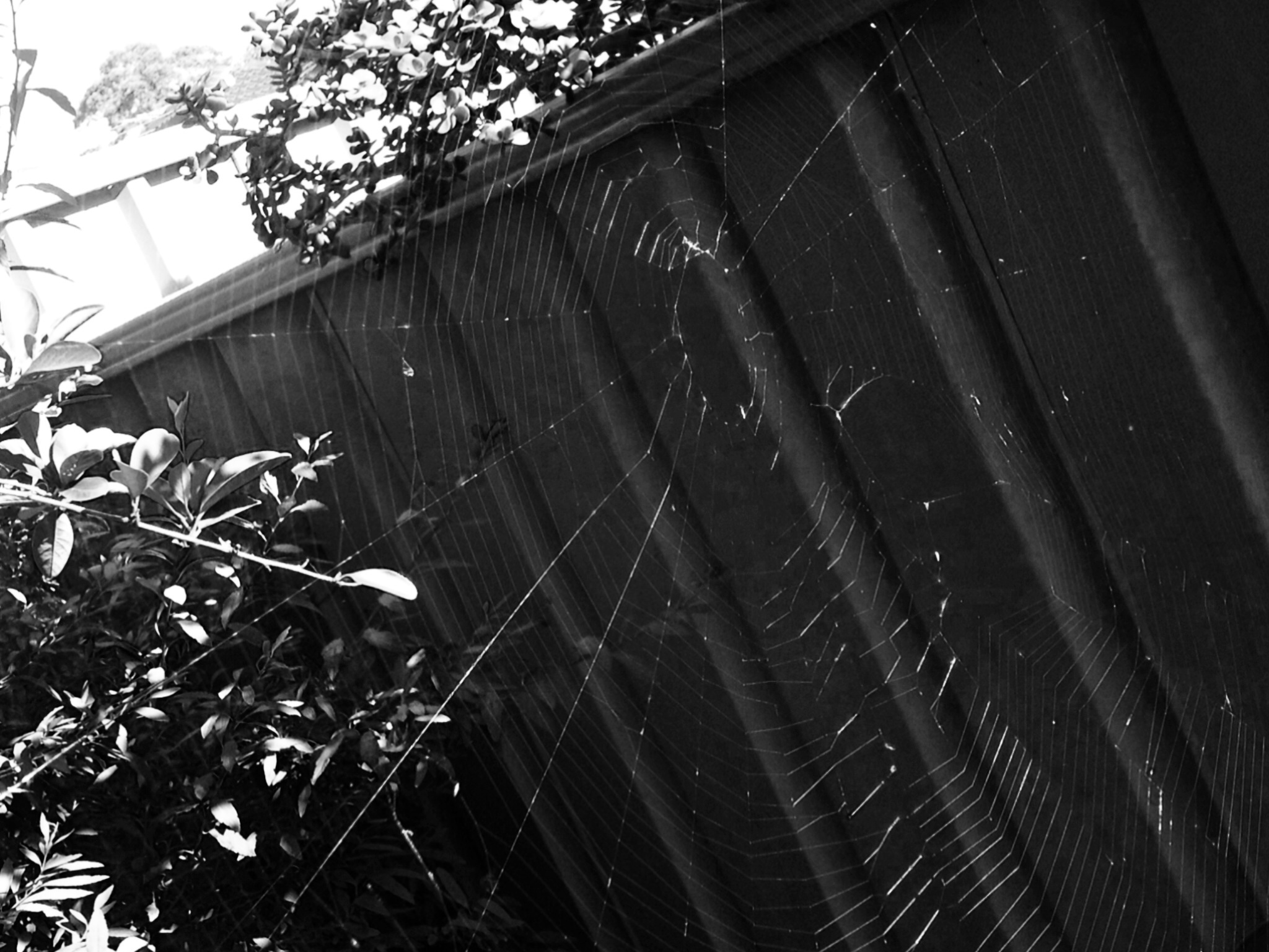 Contentment, simple living, simple life, nature walk, spider web, orb spider