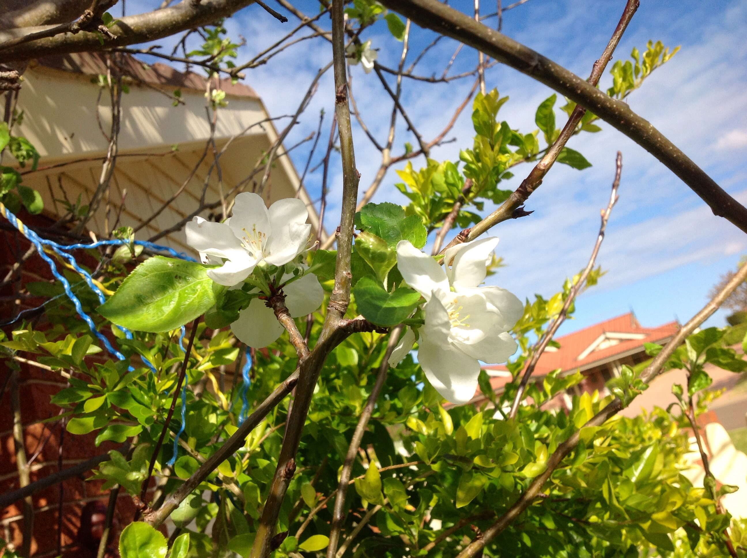 adventure, simple living, #considerthelilly, #momentintime, apple blossom